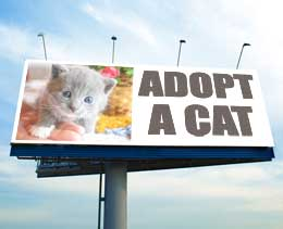 Kitten on Billboard